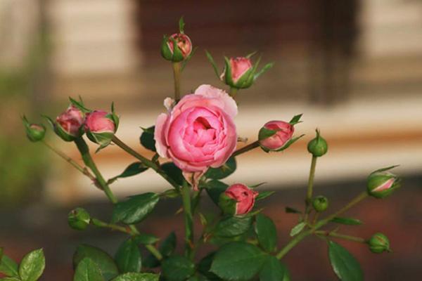 Nguồn hàng hoa Thái Lan